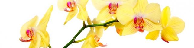 Цветы и растения_741