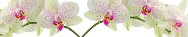 Цветы и растения_742