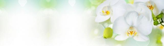 Цветы и растения_743
