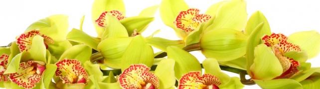 Цветы и растения_745