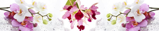Цветы и растения_746