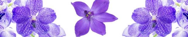Цветы и растения_747
