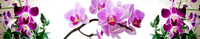 Цветы и растения_749