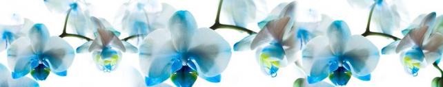 Цветы и растения_755