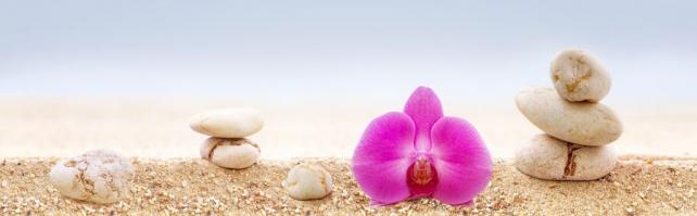 Цветы и растения_758