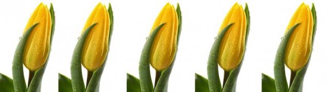 Цветы и растения_75