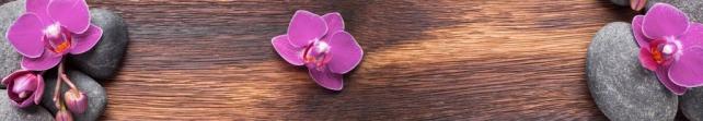 Цветы и растения_767