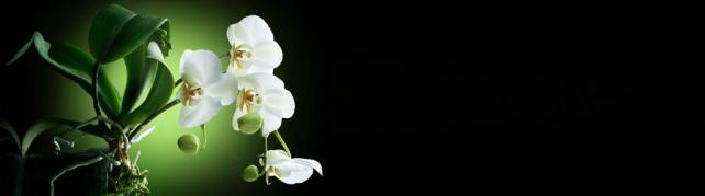 Цветы и растения_770