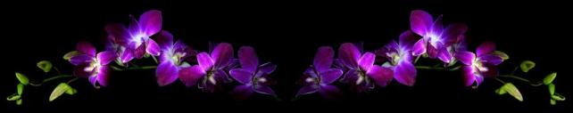 Цветы и растения_774