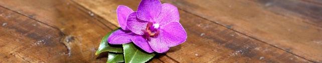 Цветы и растения_777