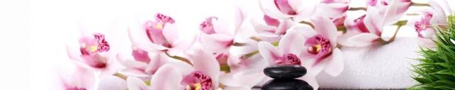 Цветы и растения_779