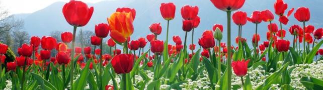 Цветы и растения_77