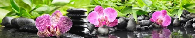 Цветы и растения_784