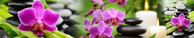 Цветы и растения_785
