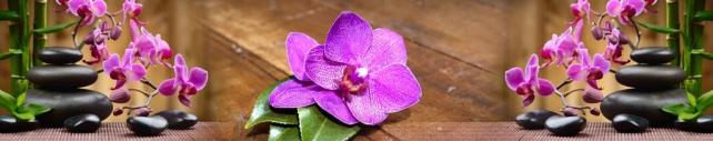 Цветы и растения_787