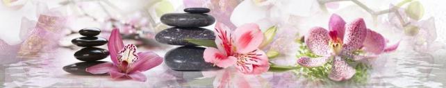 Цветы и растения_789
