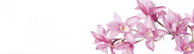 Цветы и растения_791