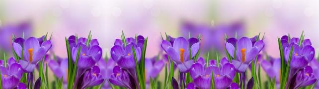 Цветы и растения_82