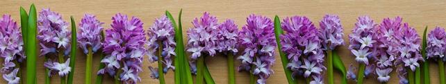 Цветы и растения_83