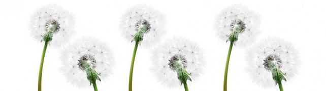 Цветы и растения_84
