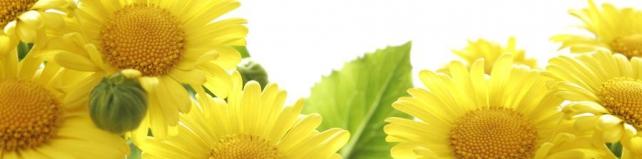 Цветы и растения_88