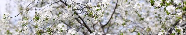 Цветы и растения_8