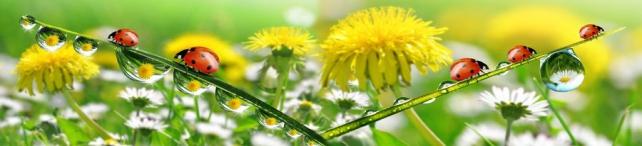 Цветы и растения_91