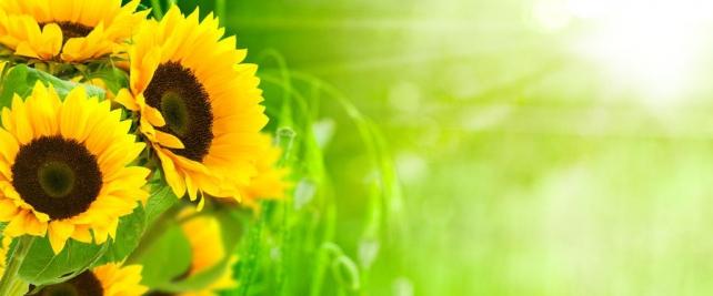 Цветы и растения_93