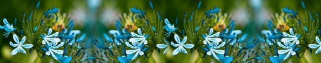 Цветы и растения_95