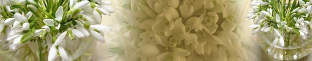 Цветы и растения_97