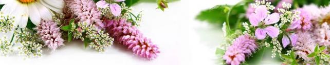 Цветы и растения_99