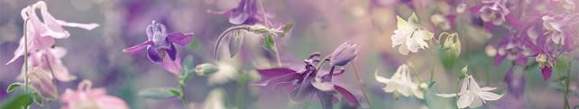 Цветы и растения_9