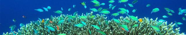 Подводный мир и животные_12