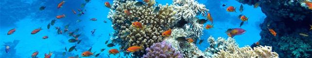 Подводный мир и животные_13