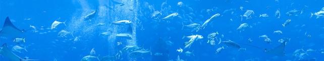 Подводный мир и животные_14