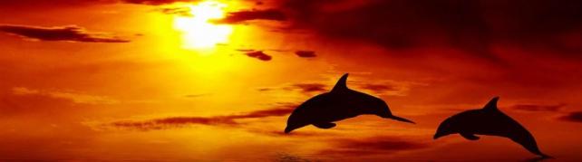 Подводный мир и животные_175