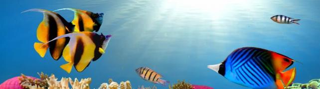 Подводный мир и животные_176
