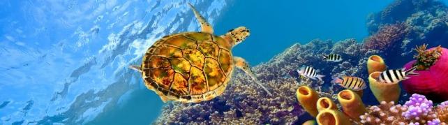 Подводный мир и животные_177