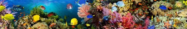 Подводный мир и животные_179