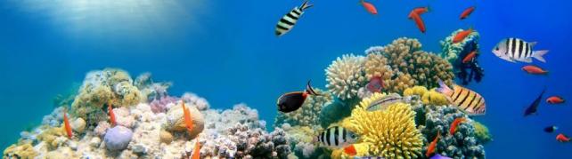 Подводный мир и животные_184