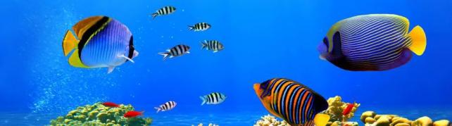 Подводный мир и животные_185
