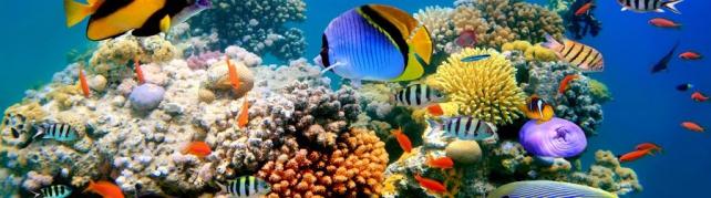 Подводный мир и животные_189