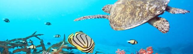 Подводный мир и животные_193