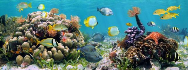 Подводный мир и животные_194