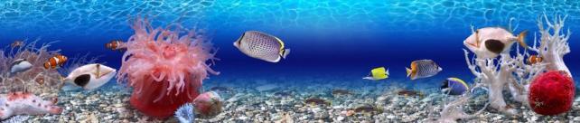 Подводный мир и животные_197