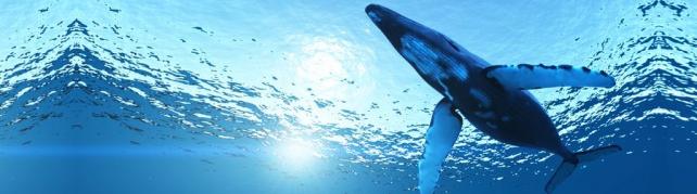 Подводный мир и животные_198