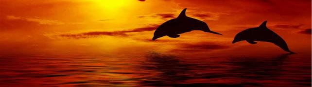 Подводный мир и животные_202