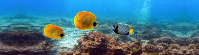 Подводный мир и животные_204