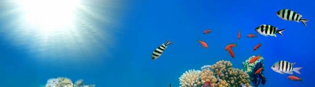 Подводный мир и животные_206