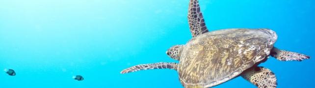 Подводный мир и животные_207